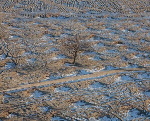 tree-in-paddock